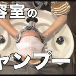【ASMR】美容室でのリアルなシャンプー 表参道 pledica