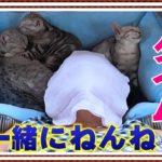 お昼寝タイム【妄想にゃんこ美容室】ねんねこっこしゃん♪【短い動画】