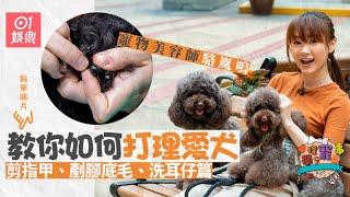 【寵物美容】駱胤鳴教你輕鬆剪指甲 洗耳﹑剷腳底毛原來勁重要!