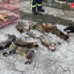 台中汽車美容廠起火 14隻貓吸入濃煙昏迷、其中3隻死亡(翻攝畫面)