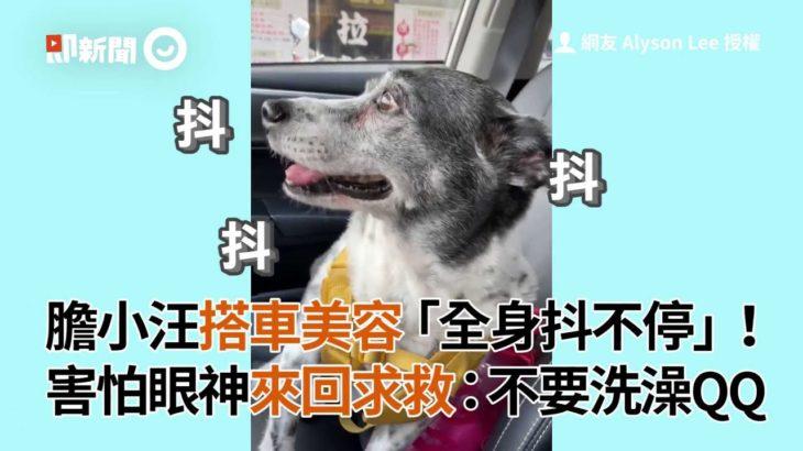 膽小米克斯搭車美容超害怕,全身抖不停:不要洗澡QQ|寵物|狗|身體