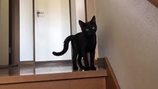 美容室がヒマなので猫とかいだんで遊ぶ!(R2.9.27)