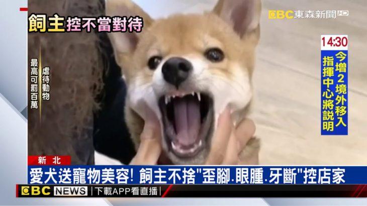 愛犬送寵物美容!飼主不捨「歪腳、眼腫、牙斷」控店家@東森新聞 CH51